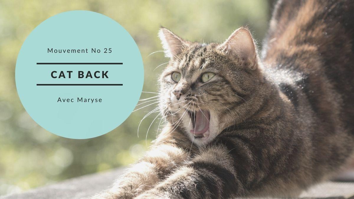 Capsule No 25 Cat Back